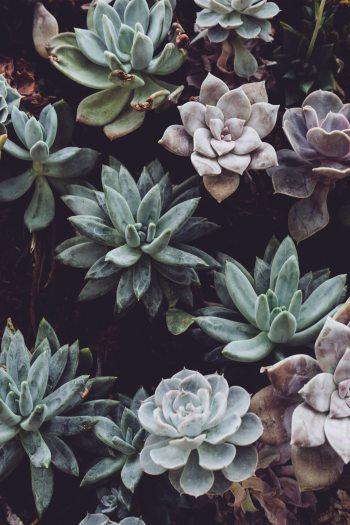 botanical-cactuses-close-up-305827